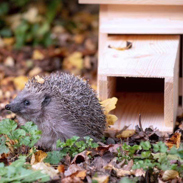 National Trust CJ Wildlife Hedgehog House
