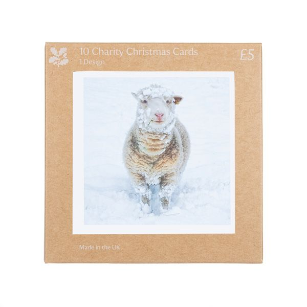 National Trust Sheep in Snow Scene Christmas Cards, Pack of 10