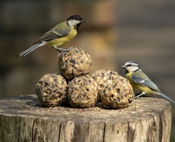 National Trust CJ Wildlife Ultimate Fat Balls, Pack of 6
