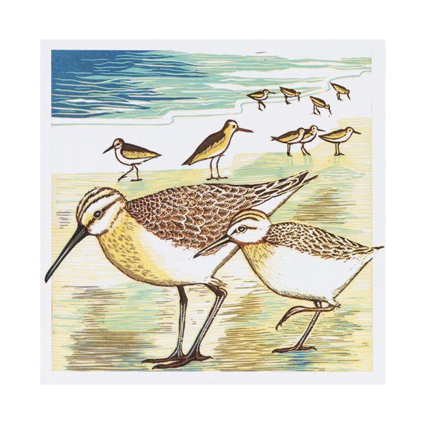 National Trust Winter Bird Marian Carter Notecards,  x 20