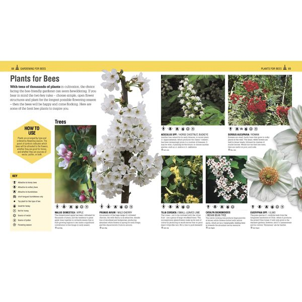 Bee Book: Discover the Wonder of Bees