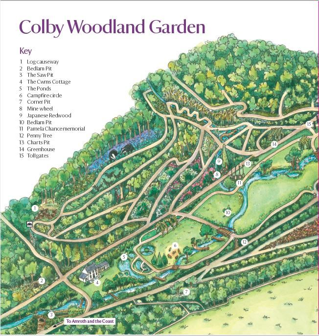 National Trust Colby Woodland Garden Guidebook