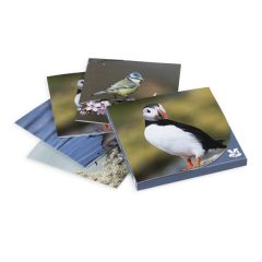 British Birds Photographic Notecards, Pack of 8