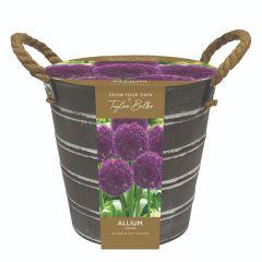 Allium outdoor Bucket
