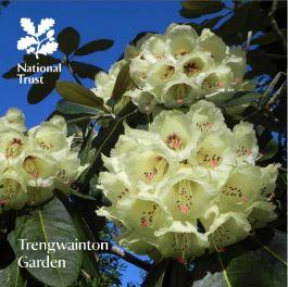 National Trust Trengwainton Garden Guidebook